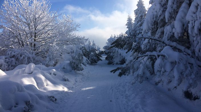 Winterlandschaft in Altenberg